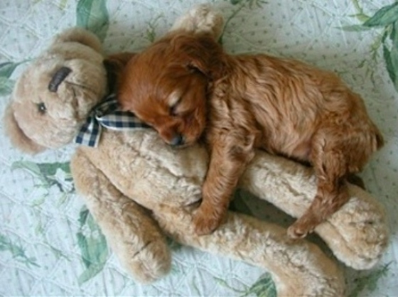 puppies and toys