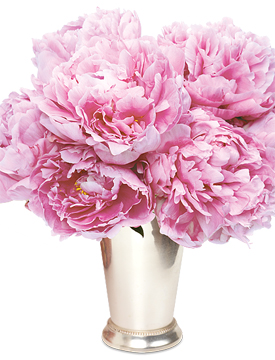 peonies in a julep cup